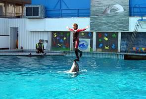 Ялта развлечения дельфинарии
