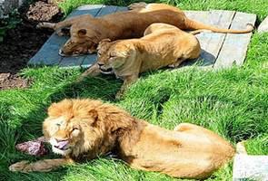 Ялта развлечения зоопарк